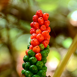 by Twanny Chicharito Falzon - Nature Up Close Other plants (  )