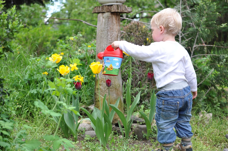 Little boy watering flowers