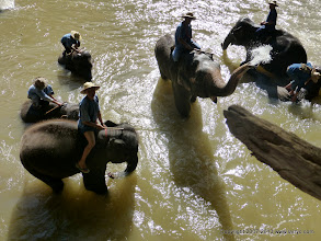 Photo: The handlers encouraged the elephants to spray water at the tourists.