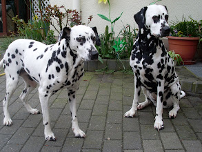 Photo: Unsere Dalmatinerdamen