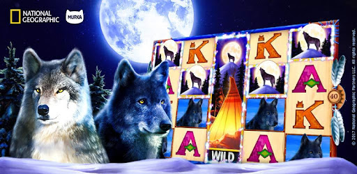 Nat Geo WILD Slots: Play Hot New Free Slot Machine game (apk) free download for Android/PC/Windows screenshot