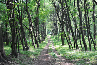 Photo: Факультативная программа: после тур - покатушка по Голосеевскому лесу с заездом в Китаево, к целебным источникам и подъездом к Голосеевскому мужскому монастырю