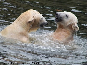 Photo: Jaaa, und ab ins Wasser :-)