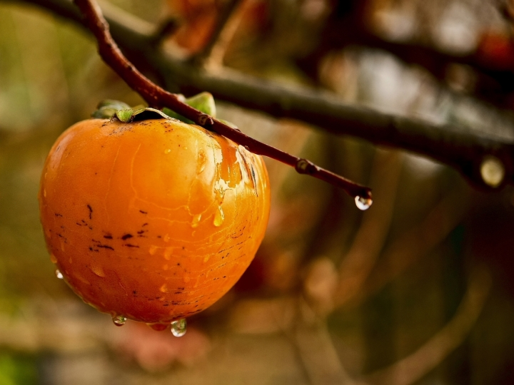 Under November rain di Charmer