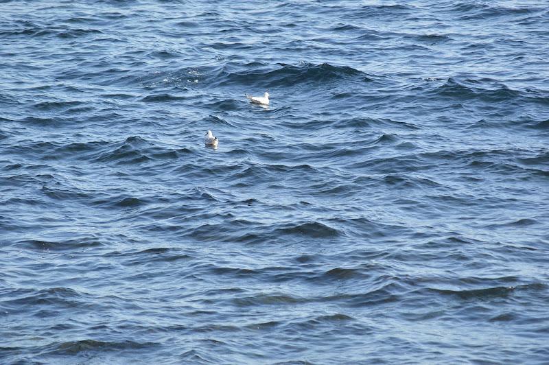 """In balia delle """"piccole ma grandi"""" onde di Jasmine_marino"""