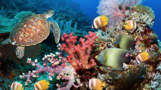 image of underwater reef