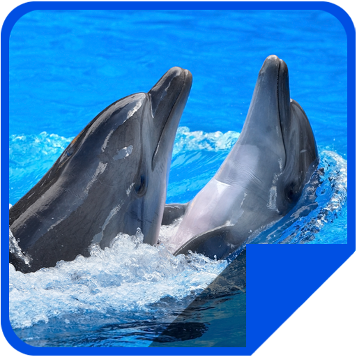 Jumping Dolphin 4K LWP