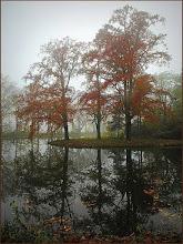 Photo: Natuur. Herfstkleuren. Foto: Marijke van den Eerthwegh