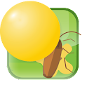Best Bug Fun Squashed icon