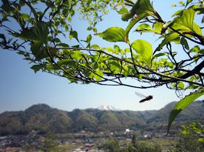 Photo: 遠くに大山