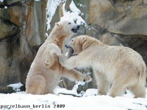 Photo: Froehliches Toben im Schnee :-)