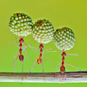 by Eko Adiyanto - Animals Insects & Spiders