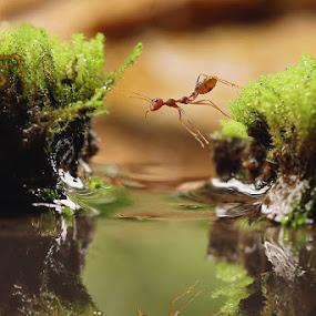 Pose & reflection by Syamsu Hidayat - Animals Insects & Spiders ( macro, reflection, fantastic wildlife, insect, bokeh, animal )