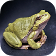The Crossing Frog icon