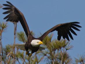 Photo: Pearland Bald Eagles