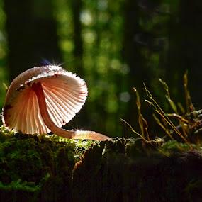by Marianna Armata - Nature Up Close Mushrooms & Fungi ( mushroom, stump, canada, green, moss, forest, sparkle, marianna armata, fungi, tree, autumn, fall, light )