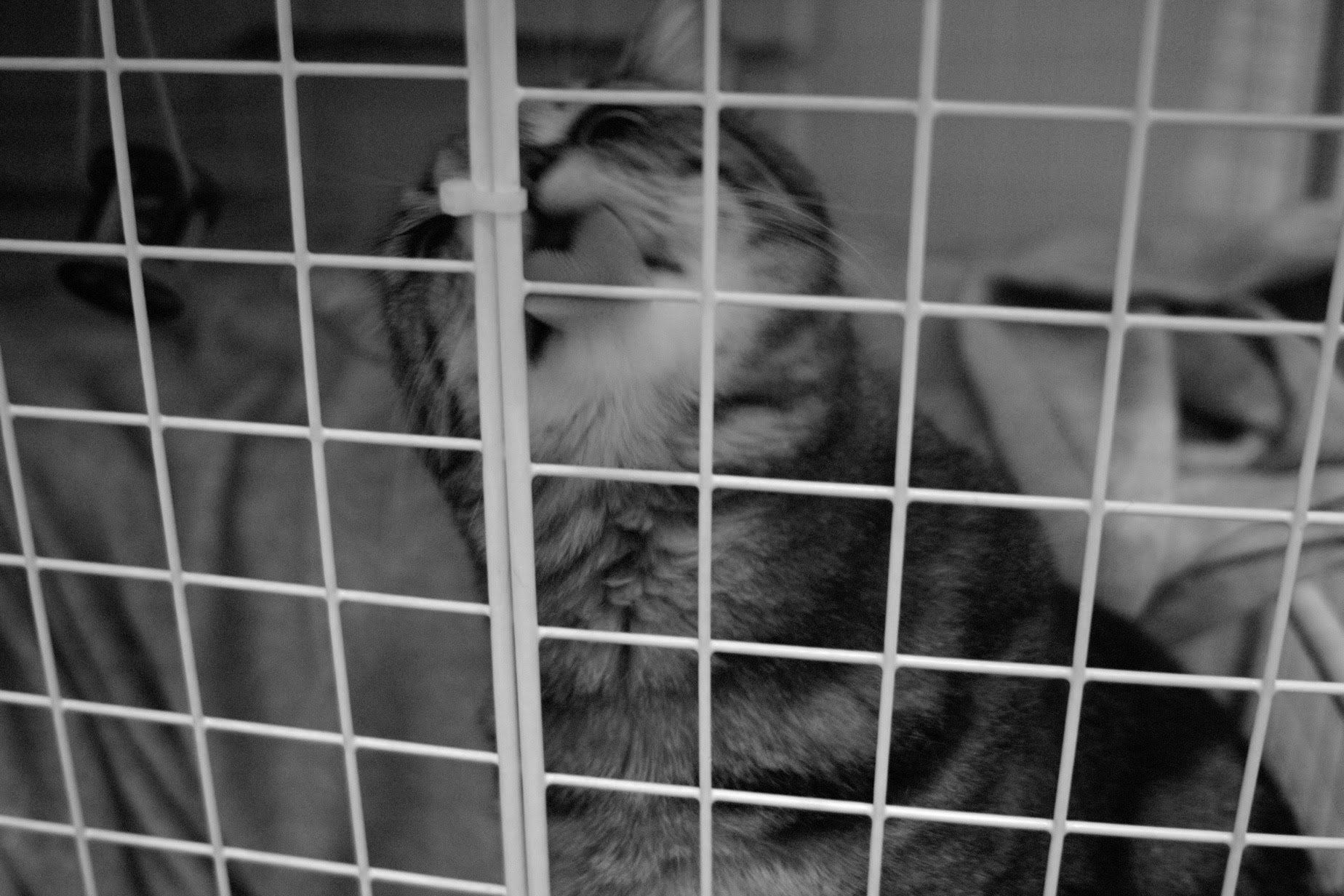 チーちゃん、ノスタルジック、猫、白黒写真、DP2、かわいい
