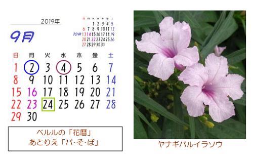 9月の花暦