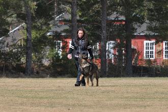 Photo: Ulvehiets Barske Kahn og Tanja trener lydighet