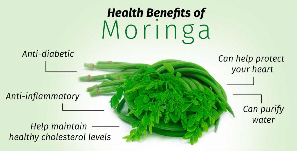 The Many Uses of the Mighty Moringa Tree