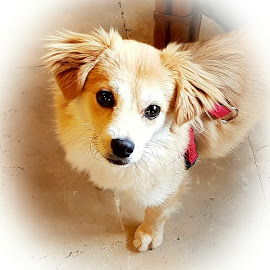 lovely puppy by Patrizia Emiliani - Animals - Dogs Puppies ( lovely,  )