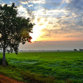green morning  by Abinash Patra - Landscapes Sunsets & Sunrises ( nature, sunset, sunrise )