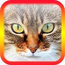 Ask the Cat - Question to Cat APK