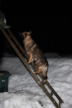 Photo: Tror jeg blir med far på taket en tur...