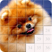Dogs - Puppies. Puzzle free
