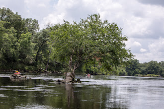 Photo: a tree in the river