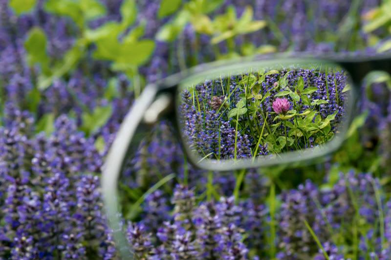 Guardare attraverso....una doppia lente di mariateresatoledo