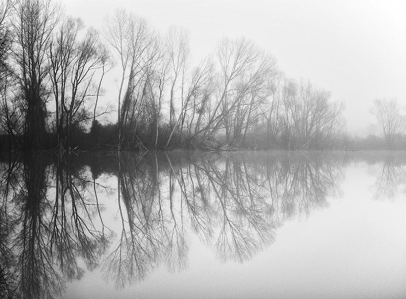 Riflessi nella nebbia di Sebastiano Pieri