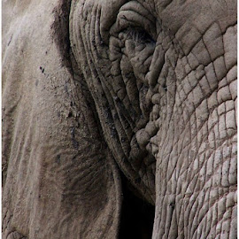 Elephants eye by Marissa Enslin - Digital Art Animals