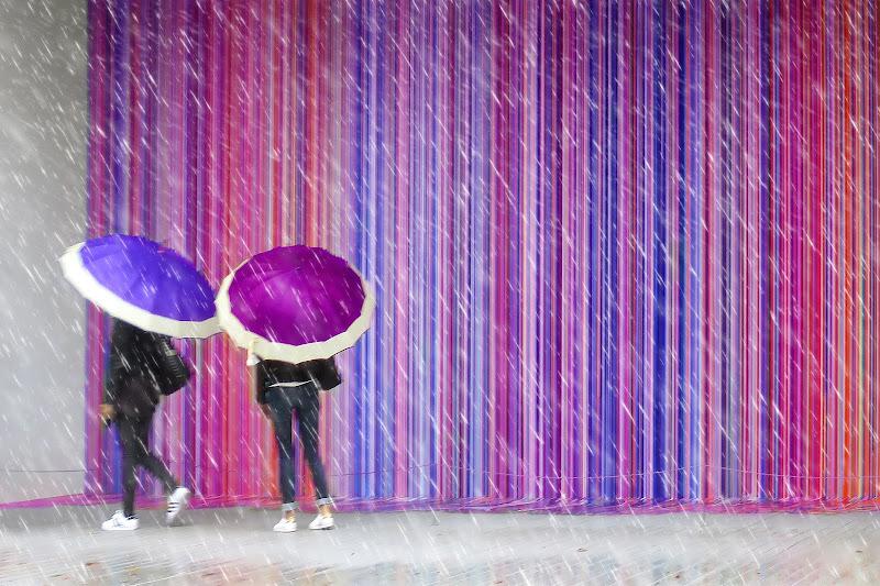 Purple umbrellas di Yoyo