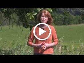 Video: กำลังขยายของกล้องส่องทางไกล (20.2 MB)