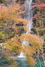 Photo: 玄倉ダム幻の滝