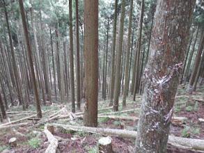 最後は植林帯を下る