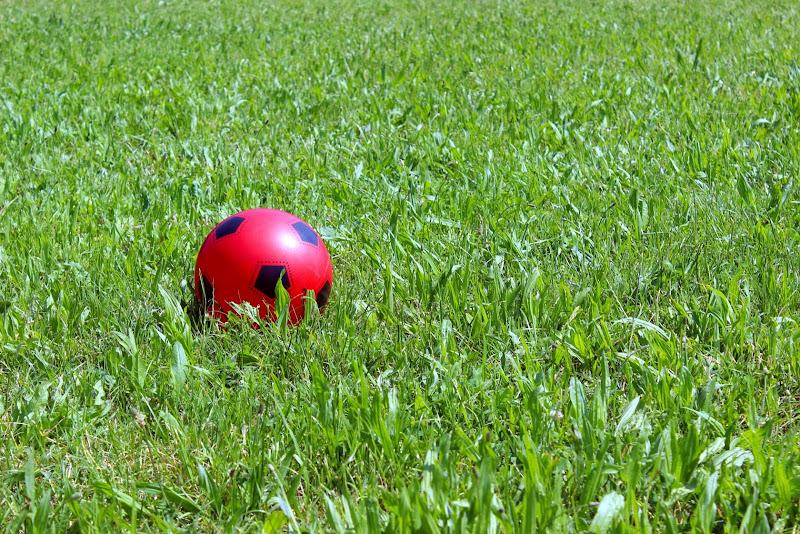 una macchia di rosso di bluerose68