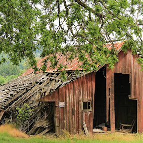 That Old Barn by Jodi Olson - Buildings & Architecture Other Exteriors ( barn )