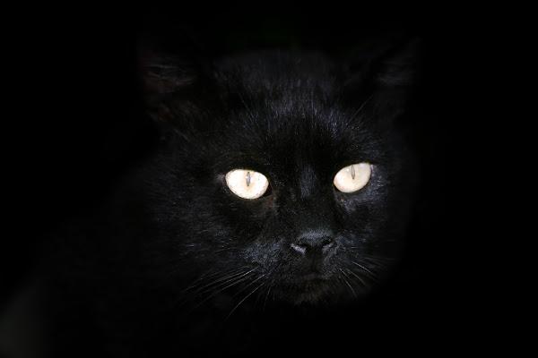 Lucifero di Fotodiale