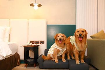 Dogether Hotel 多野樂旅館