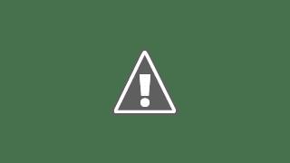 Photo: egyptian gorillas?
