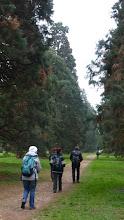 Photo: Un pied devant l'autre parmi les séquoïas.