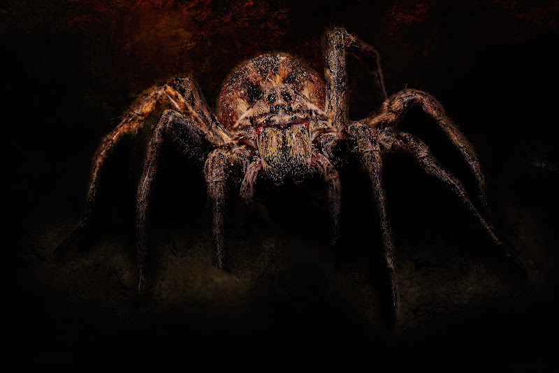 Arachnophobia di Sara Jazbar