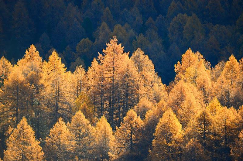 Foresta Dorata di alansa