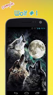 vlk tapety - náhled