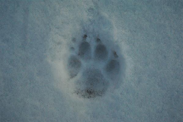 Tracks di Federica Fumarola