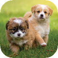 Puppy-Wallpapers-HD APK