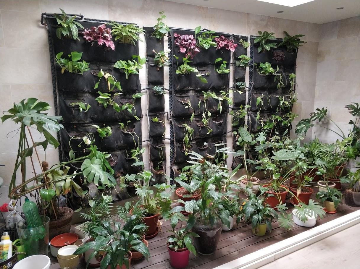 jardín vertical de interior en Elche