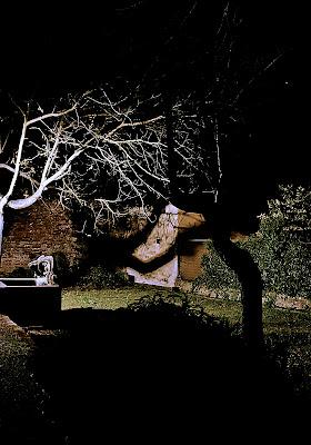 tree in the dark di StefanoRegi